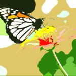 motýl2
